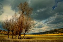 trees royaltyfria bilder