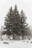 Trees3 Стоковая Фотография RF