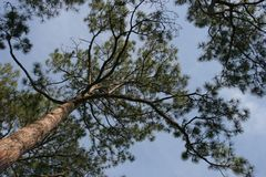 Trees. Treetops with blue sky Stock Image