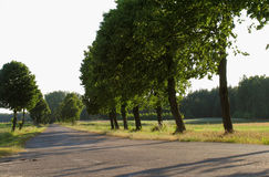 Trees. Polish country. Trees at the small road Royalty Free Stock Photography