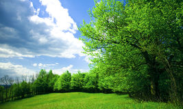 Trees. In spring afternoon, on a green field