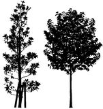 Trees. Silhouette of trees, vector art, detailed and very useful Stock Photo