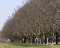Trees. Tree line royalty free stock photography
