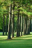 Trees Stock Photos