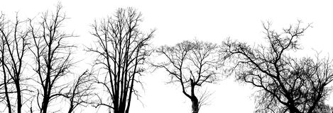 Trees. Black trees on the white background Royalty Free Stock Images
