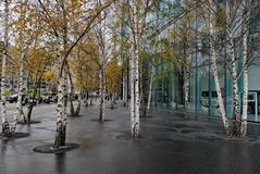 Trees. Near Sony Centre in Berlin Stock Photography