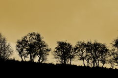 trees Arkivfoton