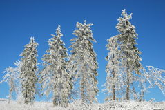 Trees. In the winter, photo was taken in Poland Royalty Free Stock Image