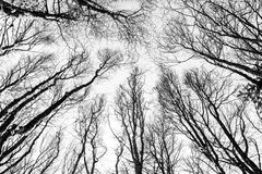 Through the Trees Royalty Free Stock Image