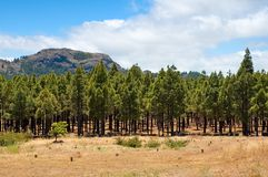 Trees. Mountain and trees Royalty Free Stock Image