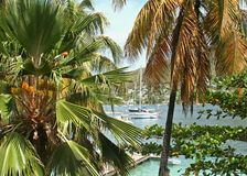 Through the Trees. A glimpse of a sail boat through a stand of palms Royalty Free Stock Photos