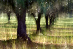 Trees. Lens blur - natural blurry background Royalty Free Stock Photos