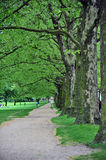 Trees. In London Hyde Park Stock Photo