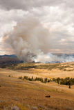 Trees ablaze while bison watch in Yellowstone. Forest fire in Yellowstone National Park, Wyoming USA Royalty Free Stock Images