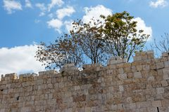 Trees above ancient stone wall Stock Photos