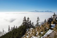 Trees above the clouds. Trees growing just above cloud line Royalty Free Stock Photos