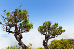 Trees above the clouds Stock Photos