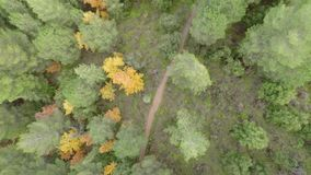 Trees from above stock video footage