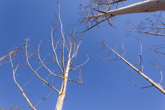 Trees Abstract Blue Sky Stock Photography