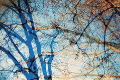 Trees. Abstract photo. Stock Photos