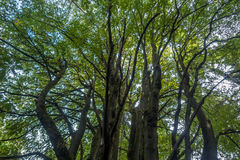 Trees Abstract Stock Image