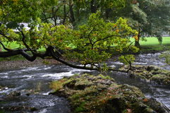 Trees across the river Stock Photography