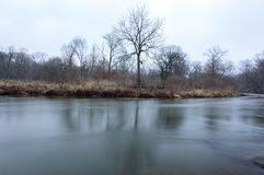 Trees Across a River in Winter stock photos