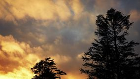 Trees Against Amazing Golden Sunset stock video footage