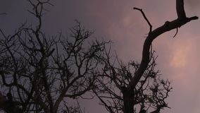 Trees against the background of a pink and blue sky video. Horizontal stock footage