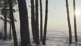 Trees against the background of a snowy field. Leaving the horizon stock video footage