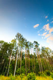 Trees against the blue sky. Stock Images