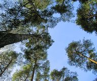 Trees against blue sky stock photography