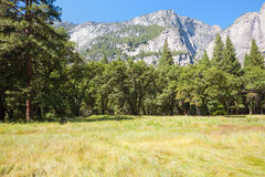 Trees against the mountains in Yosemite Stock Image