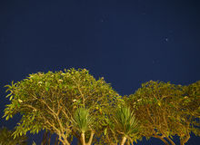 Trees against night sky Royalty Free Stock Photo