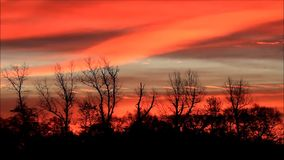 Trees against orange red sky. Beautiful landscape, trees against orange red sky stock video
