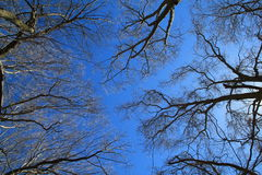 Trees Against the Sky royalty free stock image