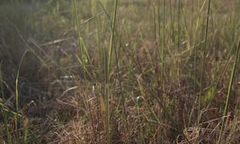 Beautiful grass made with a vintage filter. background royalty free stock photo