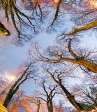 Trees against the sky in the park. Night Mariinsky park in Kiev Beautiful sunrise blue sky and the light of lanterns painted in golden color of trunks and Royalty Free Stock Images