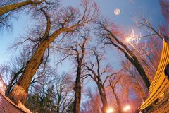 Trees against the sky in the park. Night view original wet paving stones on the lights of the city at night Kiev in a foggy Mariinsky park shine golden lights Royalty Free Stock Photos