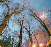Trees against the sky in the park. Night view original wet paving stones on the lights of the city at night Kiev in a foggy Mariinsky park shine golden lights Royalty Free Stock Photo
