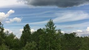 Trees against the sky. Trees in summer against a blue sky with clouds stock video footage