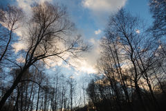 Trees against the sky. Winter ,2016 Russia royalty free stock images