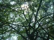 Trees against sunlight. Sunlight peeking through tree branches Stock Photo