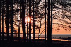 Trees against a sunset and sea. Stock Images