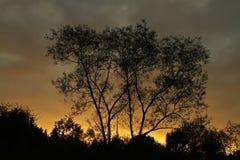 Trees against a sunset sky in Denmark Stock Image