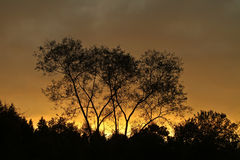 Trees against a sunset sky in Denmark Royalty Free Stock Image