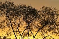 Trees against a sunset sky in Denmark Stock Photos