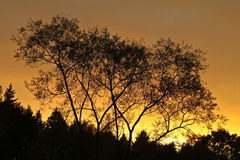 Trees against a sunset sky in Denmark Royalty Free Stock Photo