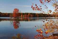 Serene autumn landscape on a colorful lake shore. Trees in all their glory glow above the lake and in reflections. A small island sits in the middle ground, its Royalty Free Stock Images