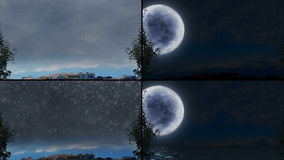 Trees at all weathers and times. In four screens stock footage